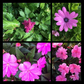 New Phototastic Collage Flower (4)