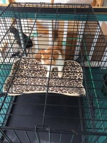 J' ai fais un hamac pour mes chats. I made a hammock for my cats.
