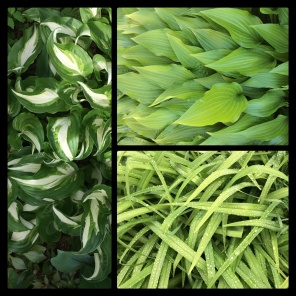 New Phototastic Collage Green (10)