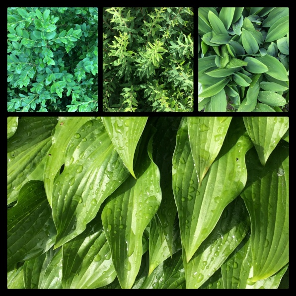 New Phototastic Collage Green 4