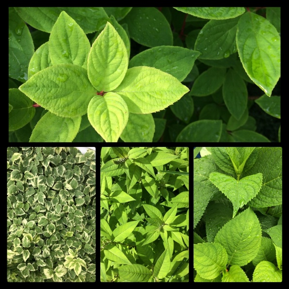 New Phototastic Collage Green 5