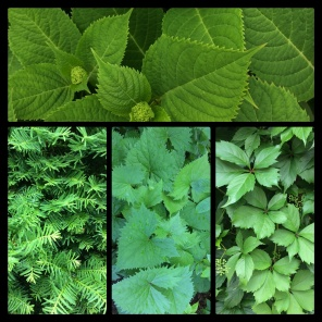 New Phototastic Collage Green 6