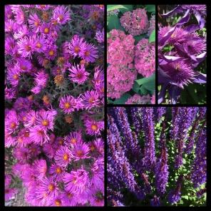 New Phototastic Collage Purple (3)
