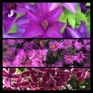 New Phototastic Collage Purple