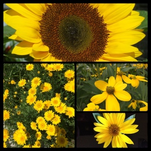 New Phototastic Collage Yellow (3)