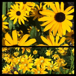 New Phototastic Collage Flower (13)