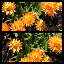New Phototastic Collage Flower (14)