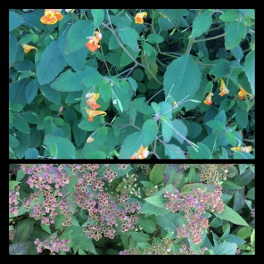 New Phototastic Collage Flower (16)