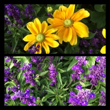 New Phototastic Collage Flower (17)