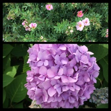 New Phototastic Collage Flowers (02)