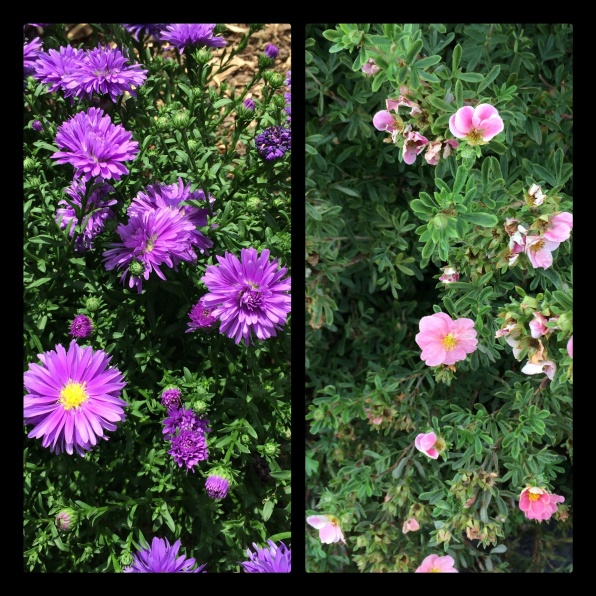 New Phototastic Collage Flowers (05)