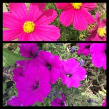 New Phototastic Collage Flowers (3)