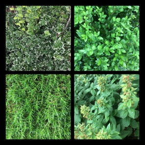 New Phototastic Collage Green (1)