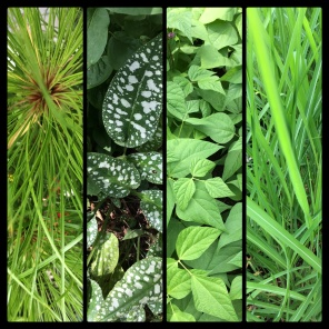 New Phototastic Collage Green (13)