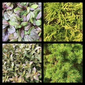 New Phototastic Collage Green (2)