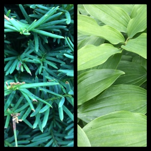 New Phototastic Collage Green (6)