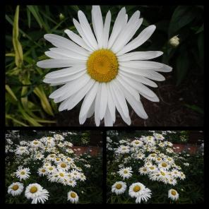 New Phototastic Collage White
