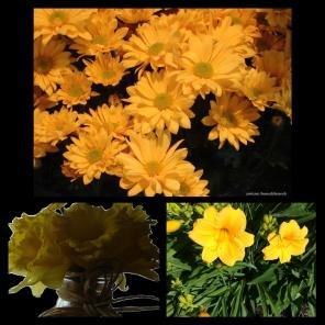 New Phototastic Collage Yellow (5)