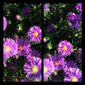 New Phototastic Collage (05)