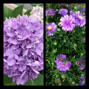 New Phototastic Collage Flowers (03)