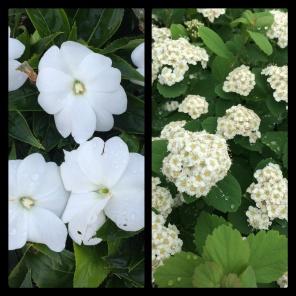 New Phototastic Collage White (3)