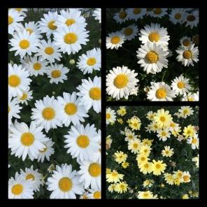 New Phototastic Collage Yellow (2)