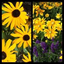 New Phototastic Collage Yellow (3)