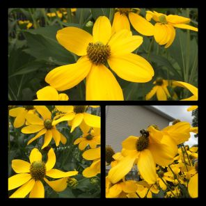New Phototastic Collage Yellow (4)