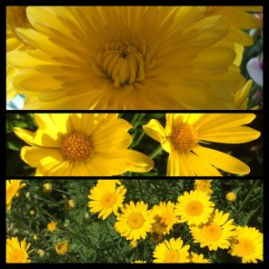New Phototastic Collage Yellow
