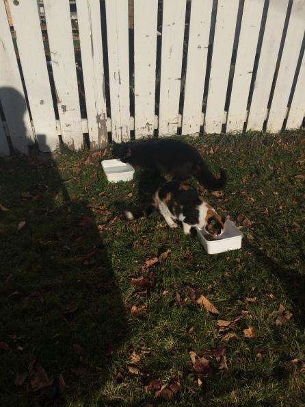 Cats-homeless-chat-sans-abris